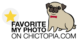 support this photo on chictopia